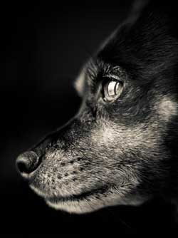 Kamala Sound - Animal Healing